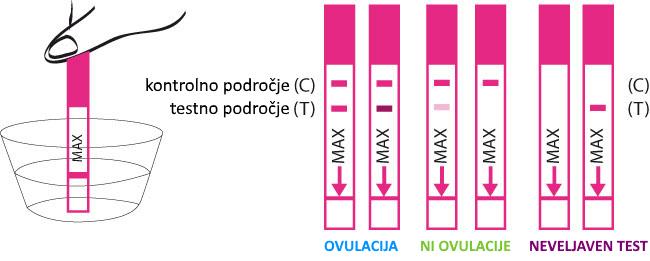 Test ovulacije