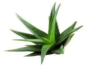 Aloe vera krema