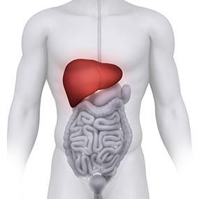 Obnovitev jeter