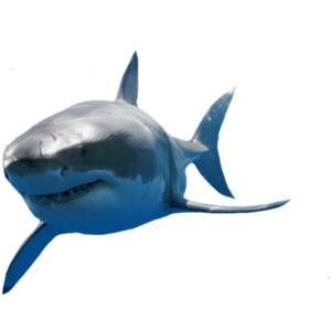 Hrustanec morskega psa