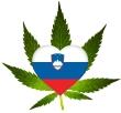 Konopljino olje - slovensko