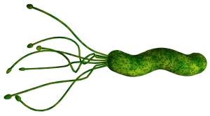 Test za bakterijo Helicobacter pylori