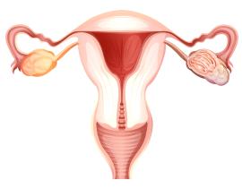 Test za menopavzo